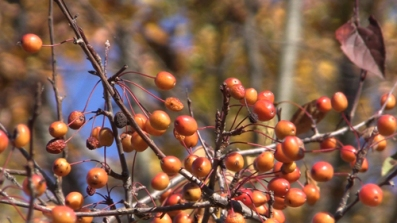Tree Berries